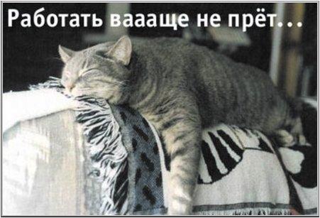 Урра! Пятнецо! 04_cat